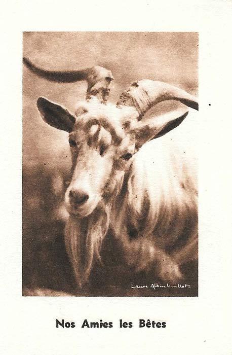 Calendrier 1951.La Malle A Papa La Malle A Papa